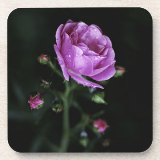 Color de rosa dramático posavasos
