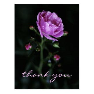 Color de rosa dramático tarjetas postales