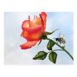 Color de rosa elegante y abeja 1 tarjeta postal