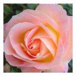 Color de rosa en colores pastel comunicado personalizado