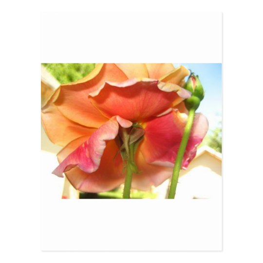 color de rosa, en colores pastel postales