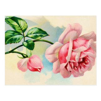 Color de rosa encantador tarjetas postales
