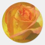 Color de rosa etiqueta redonda