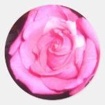 color de rosa etiquetas redondas