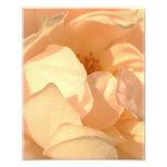 Color de rosa fotos