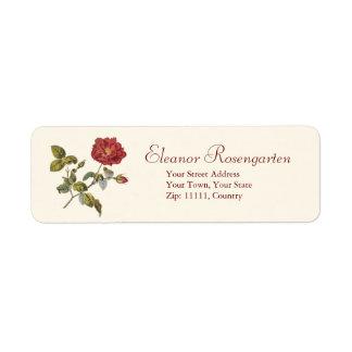 Color de rosa francés rojo salvaje antiguo hermoso etiqueta de remite