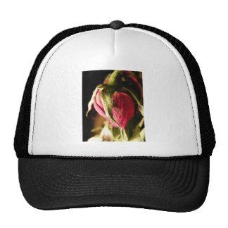 color de rosa gorros