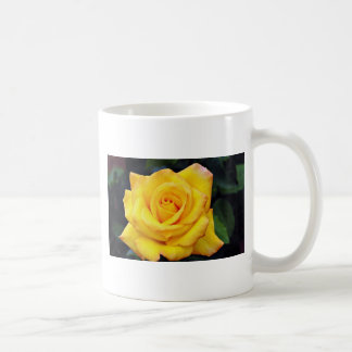 Color de rosa grandiflora de la medalla de oro, fl taza básica blanca
