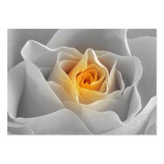 Color de rosa gris delicado
