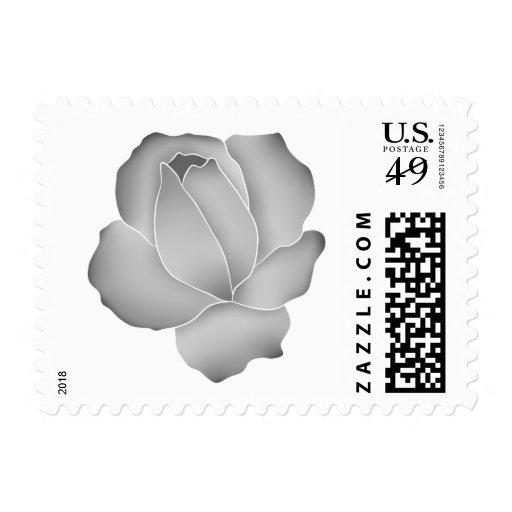 Color de rosa gris pálido bonito en blanco envio