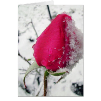 Color de rosa helada tarjeta pequeña