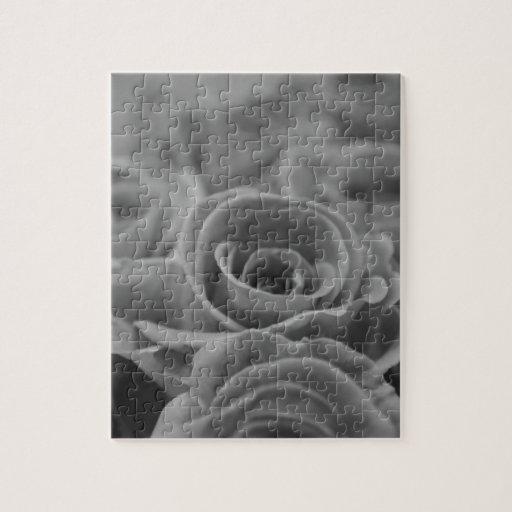 Color de rosa hermoso en blanco y negro puzzles con fotos