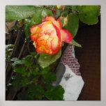 Color de rosa impresiones