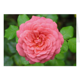 Color de rosa inglés tarjeta de felicitación