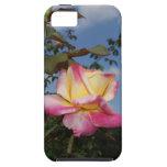 Color de rosa iPhone 5 Case-Mate cárcasa