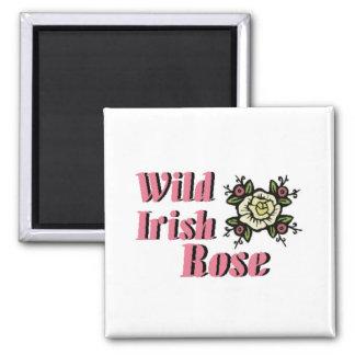 Color de rosa irlandés salvaje iman de nevera