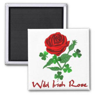 Color de rosa irlandés salvaje imán para frigorifico