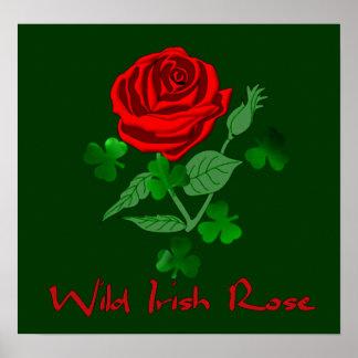 Color de rosa irlandés salvaje póster
