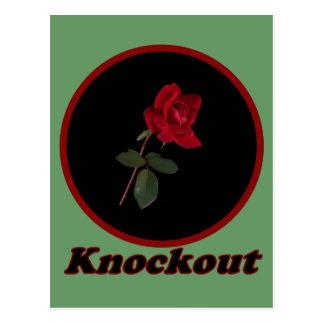 Color de rosa Knockout rojo Postales