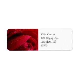 Color de rosa macro rojo con las gotitas de agua etiqueta de remite