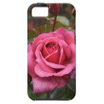 ¡Color de rosa magenta para usted! iPhone 5 Protectores