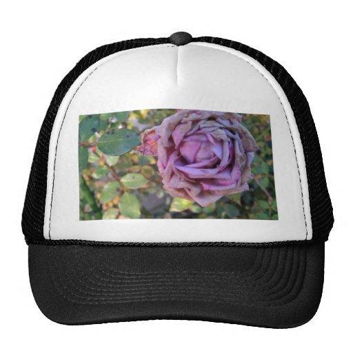 color de rosa marchitada gorras