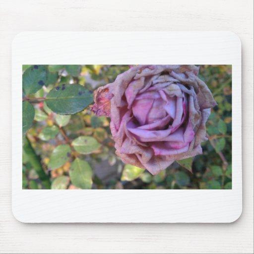 color de rosa marchitada tapete de raton