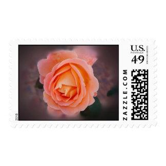Color de rosa melancólico franqueo