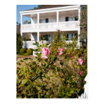 Color de rosa meridional salvaje postal