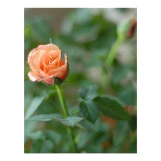 Color de rosa miniatura en rosa amelocotonado membretes personalizados