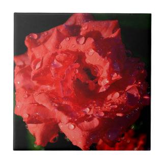 Color de rosa miniatura rojo con la teja de las go