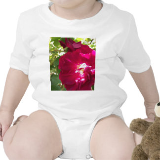 color de rosa muy abierto camiseta