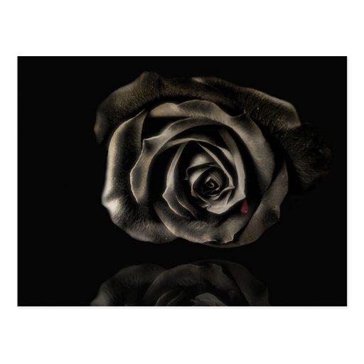 Color de rosa negro postal