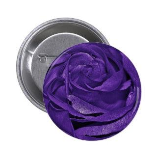 Color de rosa oscuro púrpura