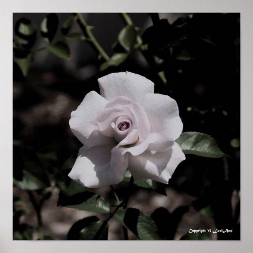 Color de rosa pálido impresiones