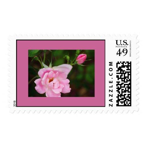 Color de rosa pasado de moda rosado sellos