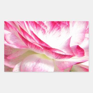 Color de rosa rectangular pegatina