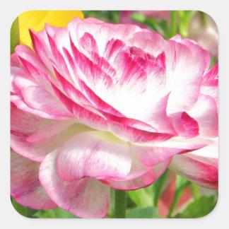 Color de rosa calcomanías cuadradas personalizadas
