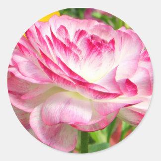 Color de rosa pegatinas redondas