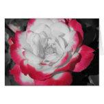 Color de rosa perfecto felicitaciones