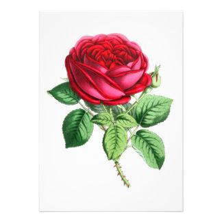 Color de rosa perpetuo híbrido - Napoleon III Invitación Personalizada