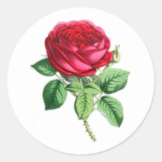 Color de rosa perpetuo híbrido - Napoleon III Pegatina Redonda