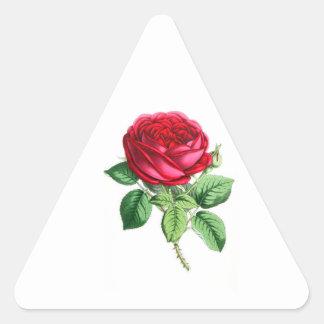 Color de rosa perpetuo híbrido - Napoleon III Colcomanias Triangulo Personalizadas