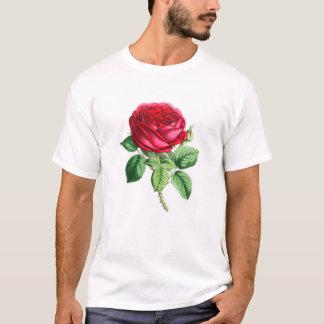 Color de rosa perpetuo híbrido - Napoleon III Playera