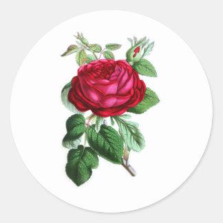 Color de rosa perpetuo híbrido, señor Napier Etiqueta Redonda