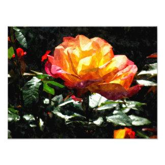 Color de rosa fotografía