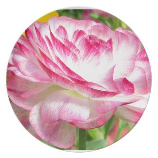 Color de rosa plato