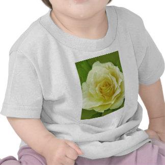 Color de rosa poner crema y significado camiseta