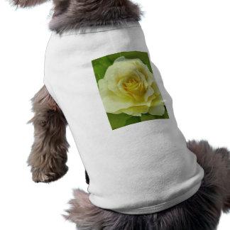 Color de rosa poner crema y significado playera sin mangas para perro