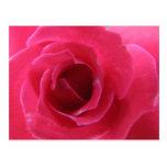 color de rosa postal